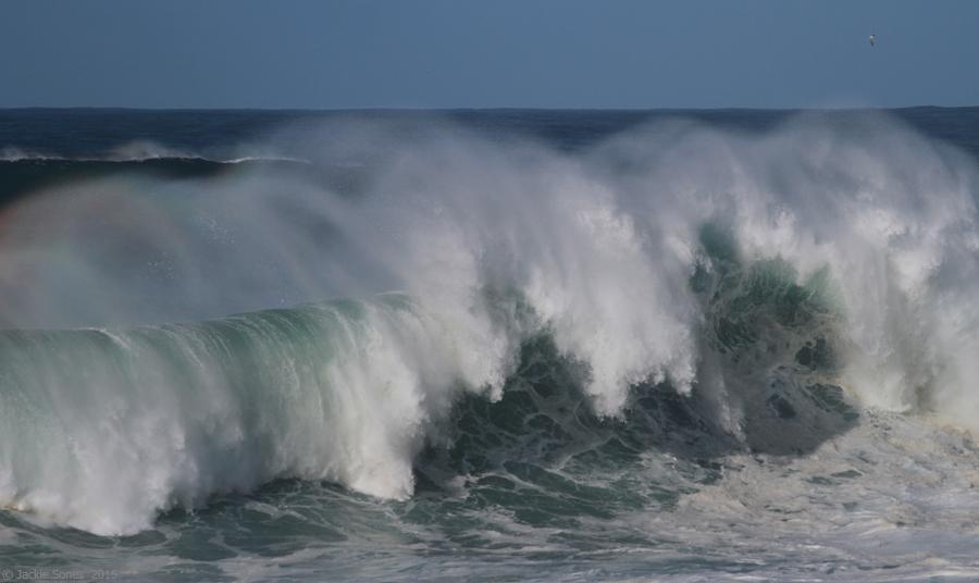 Natural History Of Bodega Head