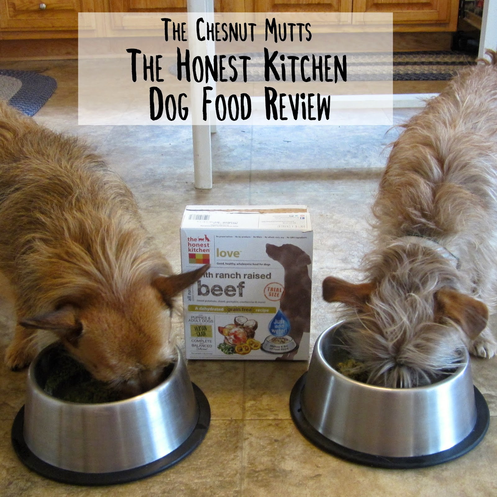 Review The Honest Kitchen Dog Food  The Chesnut Mutts
