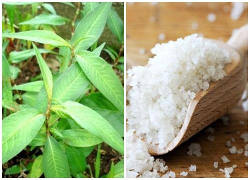 Mẹo trị mụn nhọt bằng rau răm hiệu quả theo Đông y