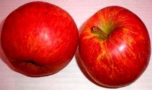 Imagen de un par de manzanas rojas