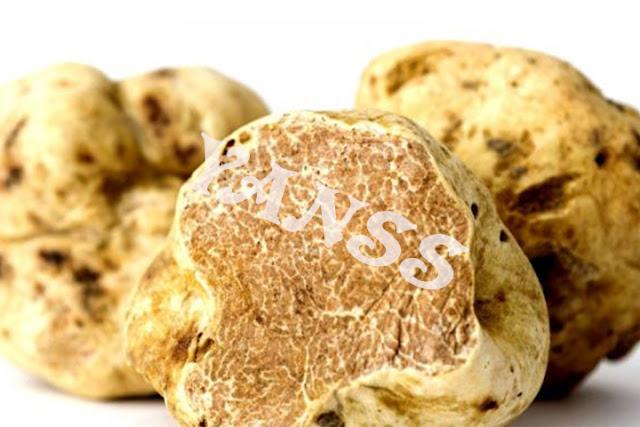 jamur, jamur bisa dimakan, jamur bermanfaat, jamur timarm, jamur kaning, jamur tudung pengantin, jamur otak, jamur kuping, jamur merang, jamur shineji, jamur enoki, jamur canterlle, jamur porcini, jamur shitake, jamur white tuffel, jamur puffball, jamur pom pom, jamur morel,jenis jamur, nama jamur, jamur enak dimakan, jamur sehat, gambar jamur, macam macam jamur, jamur krispey, jamur basah, jamur kering, jamru termahal, jamur pasaran,jamur renyah, jamur menjadi lauk, jamur balado, sop jamur, 15 jamur bisa dimakan, jamur daging panggang,jamur di campur daging, jamur manis, jamur chanterell , jamur unik, Omphalotus guepiniformis, jamur mirip raccun, jamur mahal, jamur 102jt, jamur enak, jamur menyehatkan, jamur jepang, jamur cina, jamur korea ,jamur murah, harga jamur, jamur unik, jamur alami, jamur alam, jamur alami yang bisa dimakan, jamur alam yang bisa dimakan, resiko kesehatan, resiko salah memasak, resiko salah memasak jamur, memasak jamur, memasak jamur dengan benar, Iritasi Gastrointestinal, racun orellanine, racun gyromitrin, muscarine