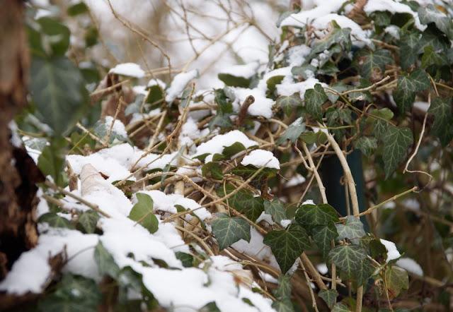 Rund um den Tröndelsee: Unser Winter-Spaziergang mit Schlitten. Rund um den Tröndelsee gibt es viele Pflanzen- und Tierarten zu entdecken, die teils unter Naturschutz stehen.