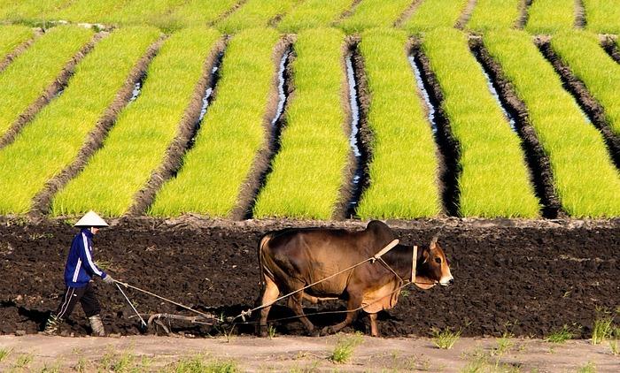 Perlukah Ekonomi Pertanian Syariah