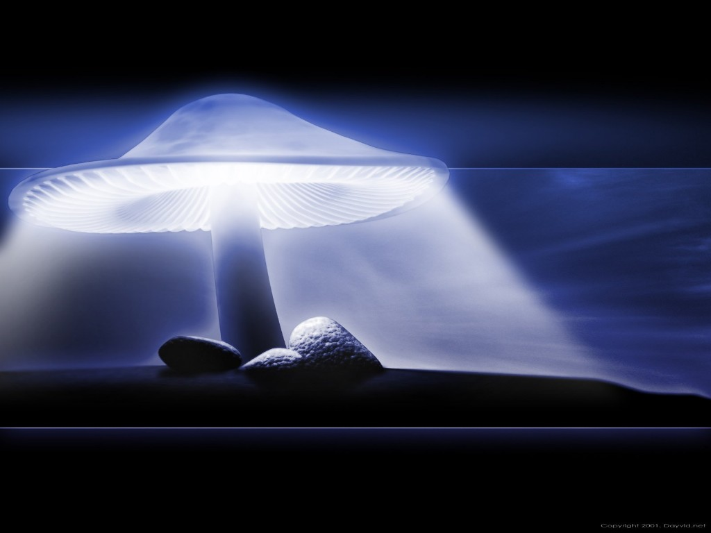http://4.bp.blogspot.com/-FyguMmH-GcM/T1O5O0Gwu3I/AAAAAAAABCU/12v_2cYcLJ4/s1600/3d-wallpaper-desktop-magic-mushroom.jpg