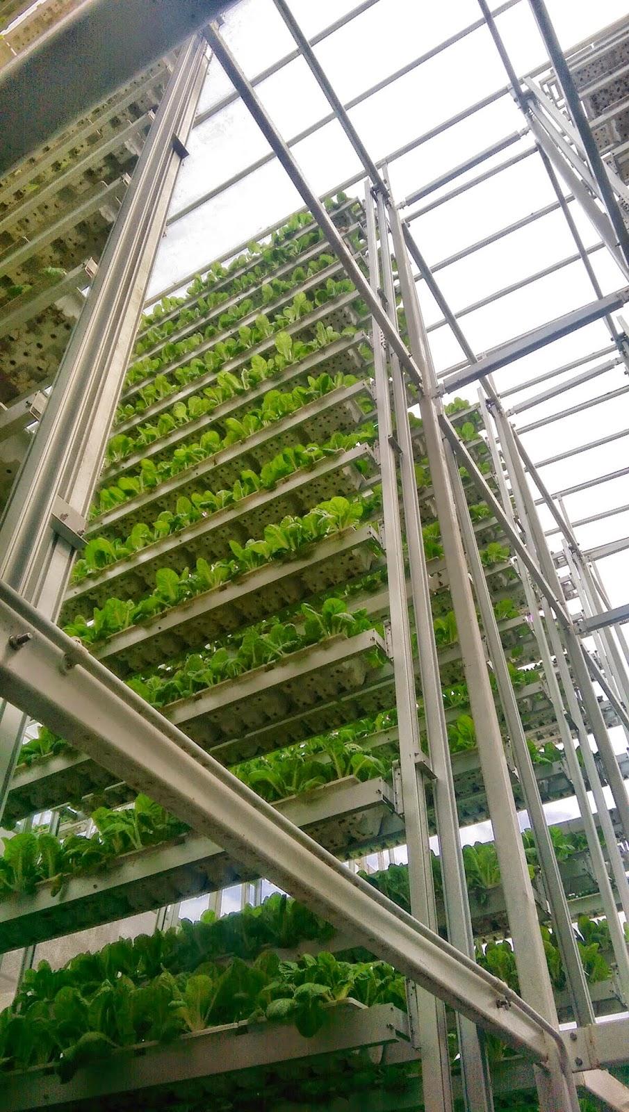 Urban Farming In Singapore Urban Architecture Now