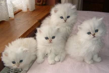 Contoh Perilaku Tidak Disiplin Di Rumah Unity Of Science Built For Future Education Jendela Hewan Cara Melatih Anakan Kucing