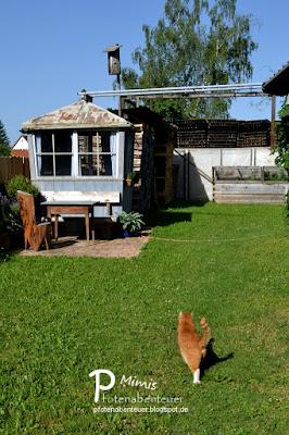 Wettrennen im Garten mit Katze Mimi