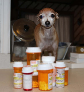 Little dog with many bottles of pills