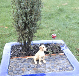 japanese Junipers and Dogs