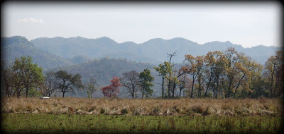 Dhikala Zone in corbett national park