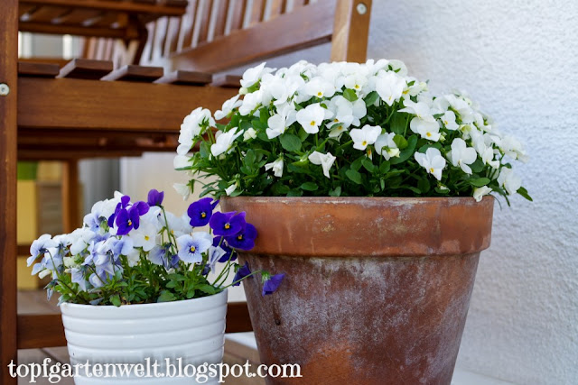 Topfgarten aus Kübeln und Töpfen bepflanzen - Gartenblog Topfgartenwelt