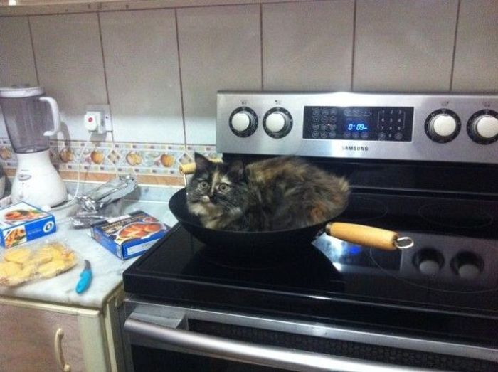 Funny cats - part 226, best funny cat photos, cat pictures, cat gallery