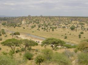 subtropisches klima vegetation