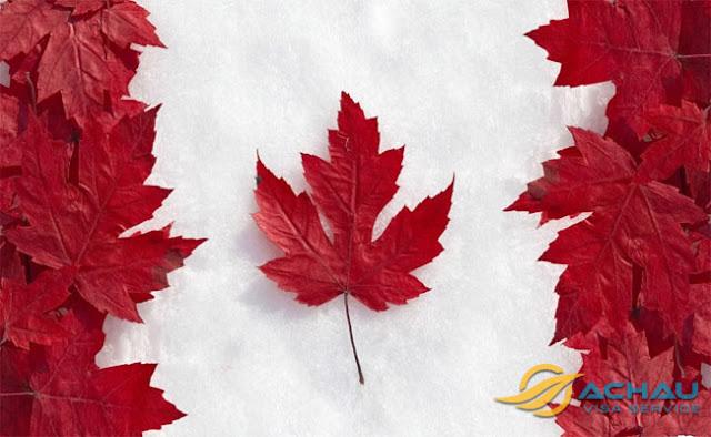 Lá Phong biểu tượng của Canada