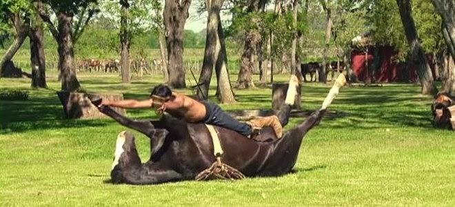 Εχετε δει ποτέ ζώα να κάνουν γιόγκα- Μία σχολή προσφέρει μαθήματα σε… νευρικά άλογα [εικόνες]