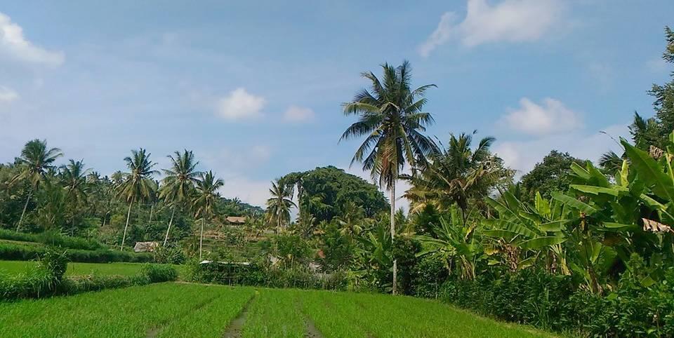 Bali villages (Ubud Seminyak Kuta)