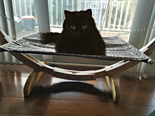 Beds for your cat by barbies beauty bits