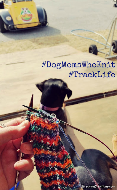 Track Life... knitting and people watching for our pit. Penny is in her happy place! #DogMomsWhoKnit #RaceTrack #USLegendsRacing #TrackDog #DobermanMix ©LapdogCreations