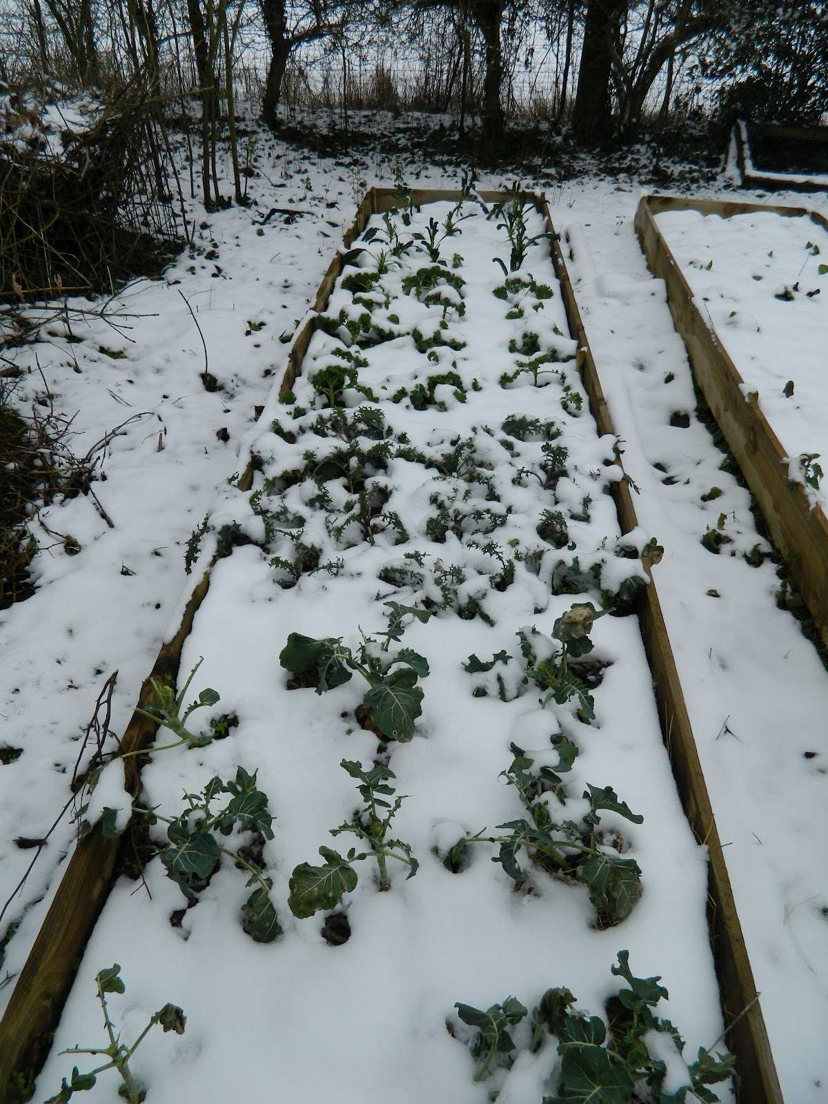 anita u0027s vegetable garden in the snow u003dfrozen vegetables dreaming
