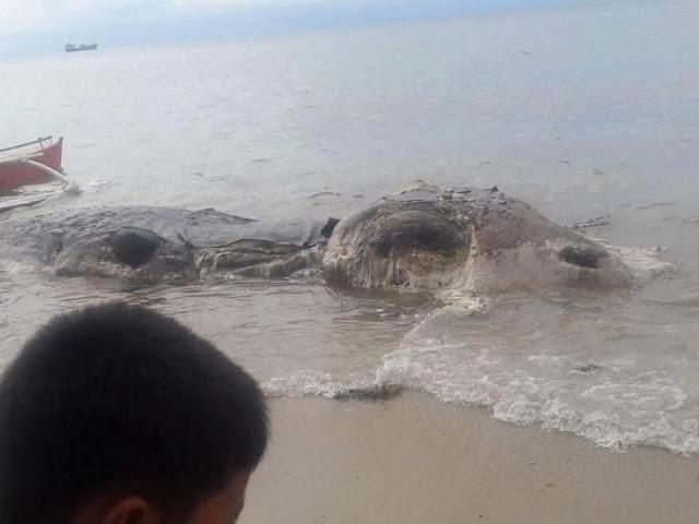 Aparece misteriosa criatura en las playas de Filipinas