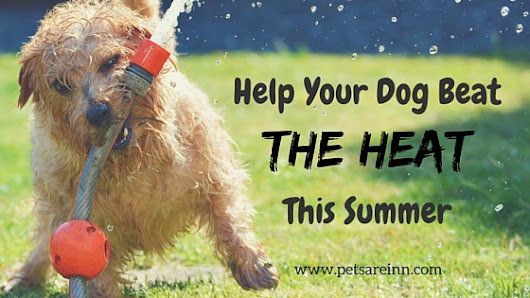 Summer Safety Tips for Helping Your Dog Beat the Heat
