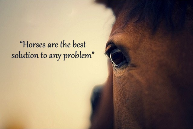 Horses are the best solution to any problem