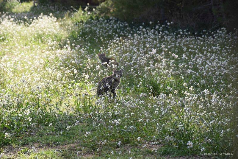 pradera de flores blancas y gato