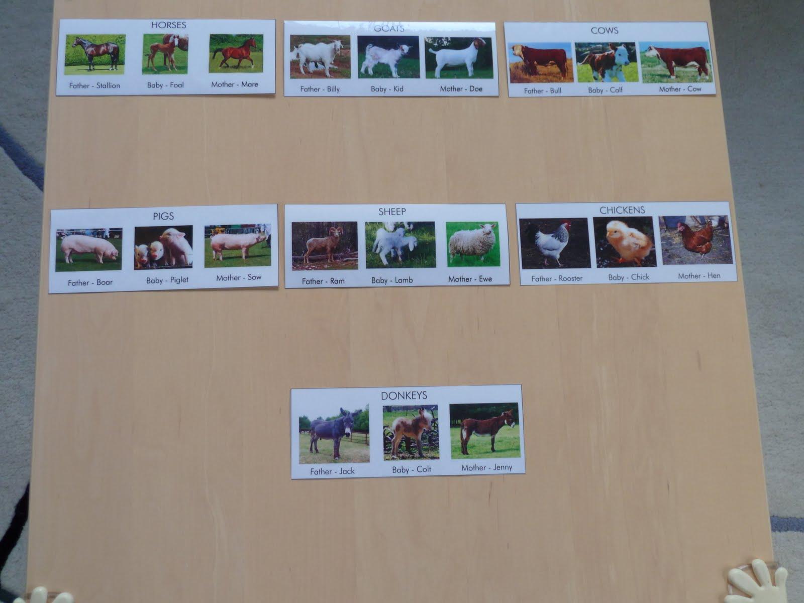 Family Fecs Montessori Activity Matching Family Of Farm Animals