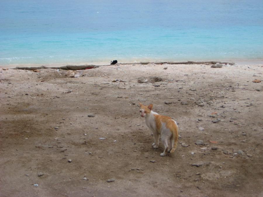 해변의 고양이