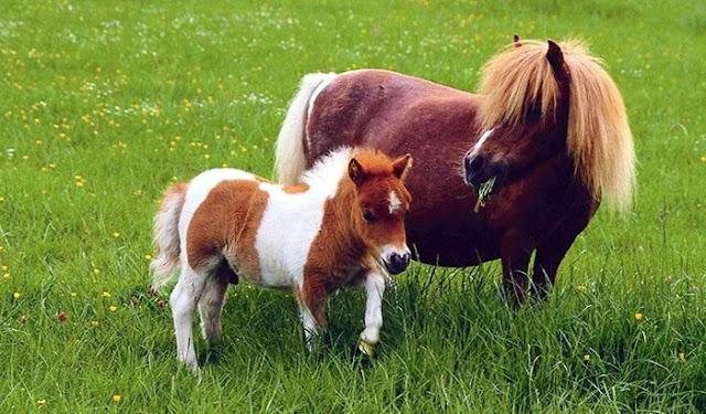 Sebastian Lucas: The way to his own pony