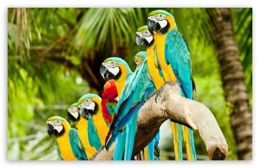 Rasta Lion Hd Wallpaper Funny Blue Parrot Widescreen Wallpaper Funny Animal