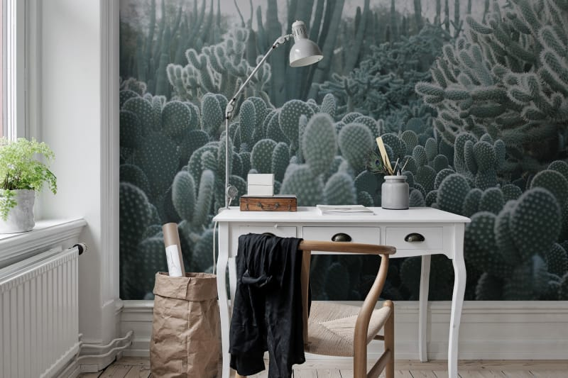 kaktusy na tapecie