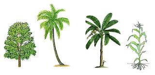 Mengenal Fungsi Batang Pada Tumbuhan (Ilmu Pengetahuan Alam)