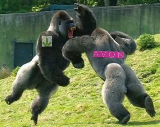Herbalife contra Avon Lucha de dos Bestias Feroces