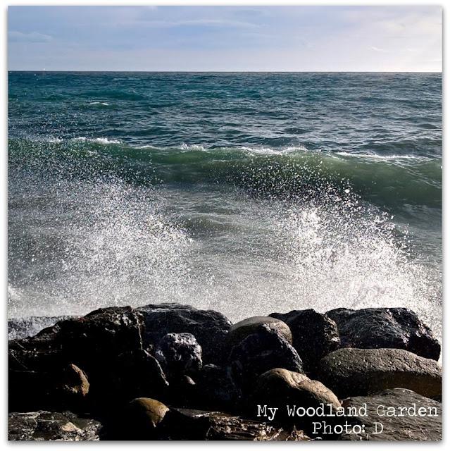 seaside mare