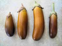 Μελιτζάνα σπορά φύτεμα καλλιέργεια-Little fingers