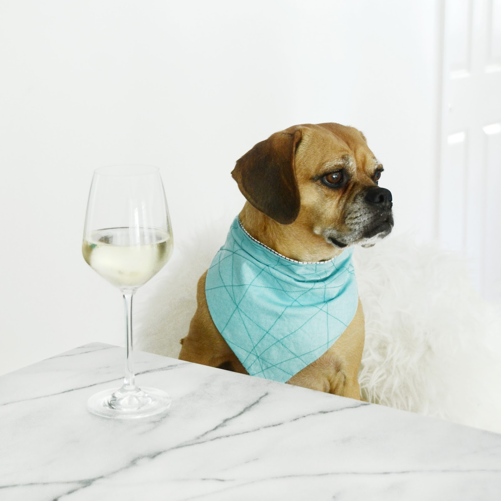 Dog Sewing Patterns New Design Ideas