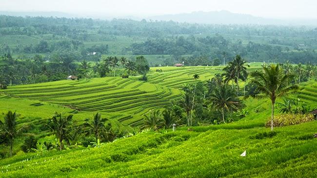 Los arrozales de Bali