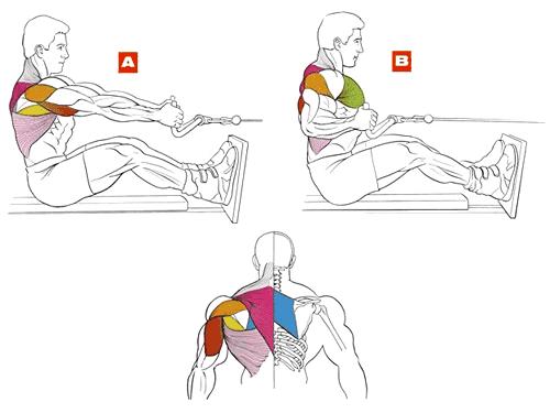 правильная техника тяги горизонтального блока к поясу