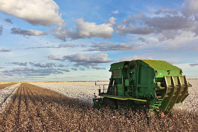 Bahia certifica como sustentável mais de 75% da produção de algodão nesta safra 2017/2018