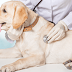 Identifying Dog Disease Symptoms-and What to Do Before It's too Late