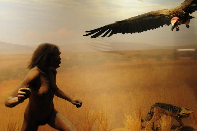 No giant leap for mankind: why we've been looking at human evolution in the wrong way