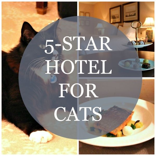 hotel for cats sydney