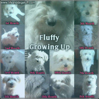 Fluffy growing up month one to eleven.