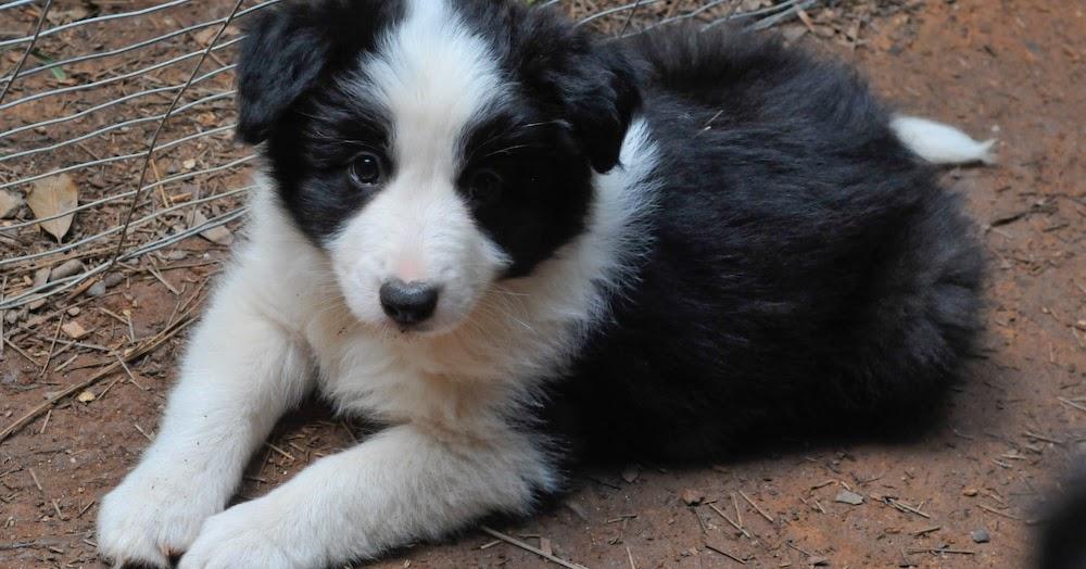 The Modern Bark   Dog Training Tips: 10 Puppy Teething ...