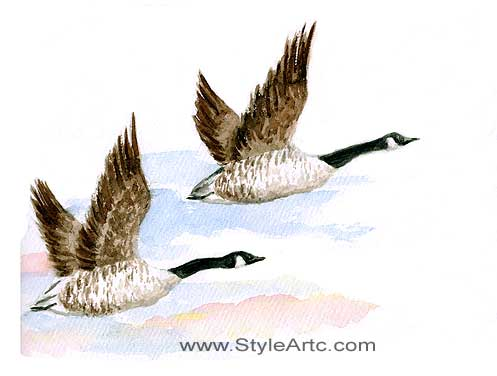 Canada Geese Watercolor Art