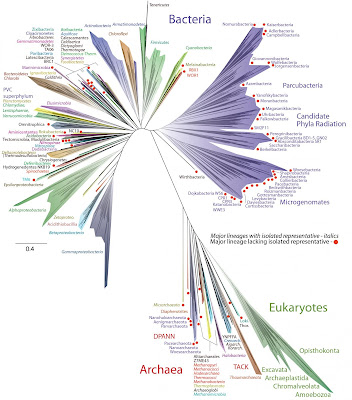 Wealth of unsuspected new microbes expands tree of life