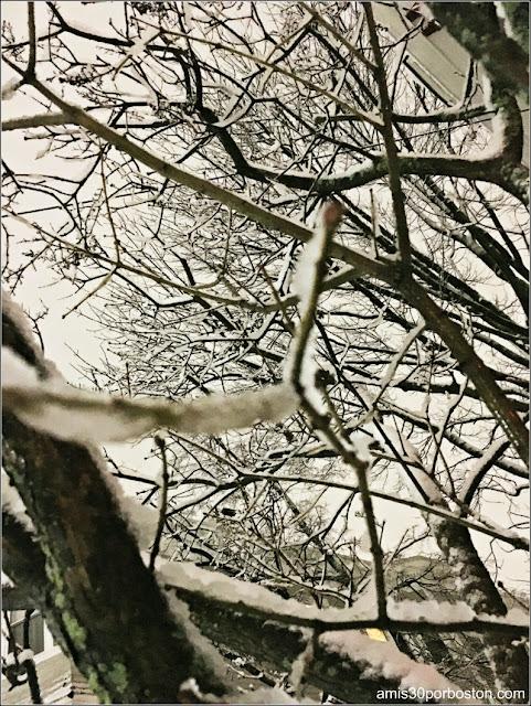 Ramas Congeladas durante el Invierno del 2017