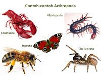 Pengertian Umum Arthropoda Beserta Ciri-Ciri, Klasifikasi, Reproduksi, dan Peranannya
