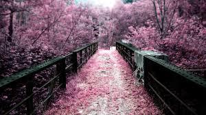 world best bridge hd wallpaper35